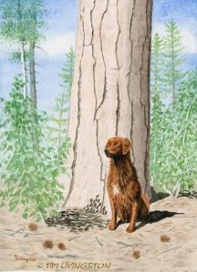 watercolor, watercolour, Ponderosa pine, golden retriever