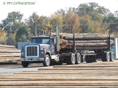 Logging, logger, logs, logging truck, loader, timber harvesting