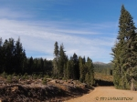 Forestry, wildlife, logging