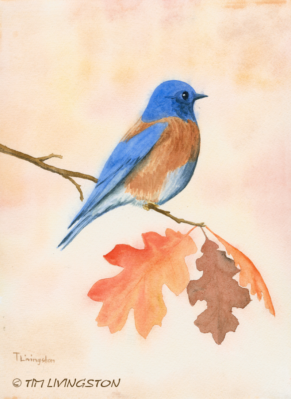 watercolor, watercoulor, western bluebird, bluebire