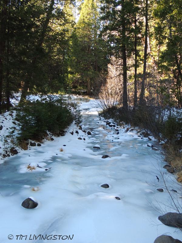 frozen creek, forestry, logging