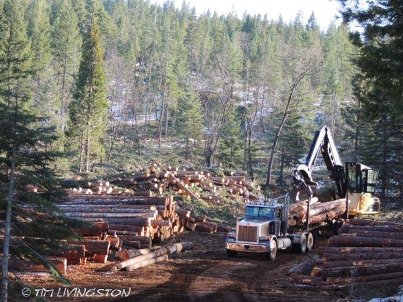 logging, winter logging, forestry, loggers