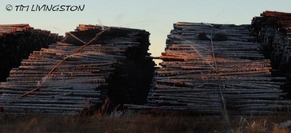 Log-deck