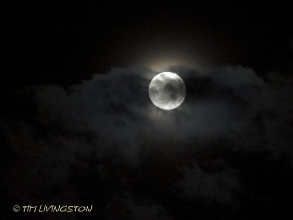 moonlit, moon, photography