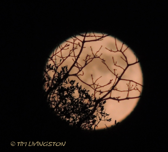 moon, blue oak, photography