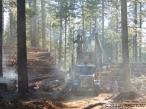 logging, log truck, log loader, timber harvesting, logging, logger, forestry