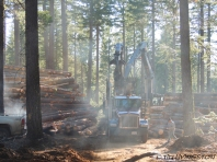 logging, log truck, log loader, timber harvesting, logging, logger, forestry