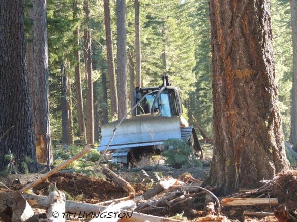 skid cat, skidder, logging, logger