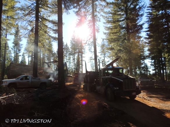 log truck, loader, logging, logger, forestry, timber harvesting