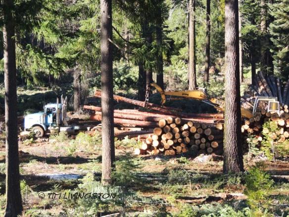 logging, loader, heel boom, log truck, logger, timber harvesting, forestry