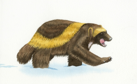 Buddy the Wayward Wolverine, wolverine, watercolor, watercolour, art, childrens books
