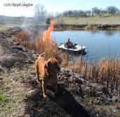 yardwork, forester, flames, fire, golden retriever