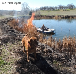 yardwork, forester, flames, fire, golden retriever