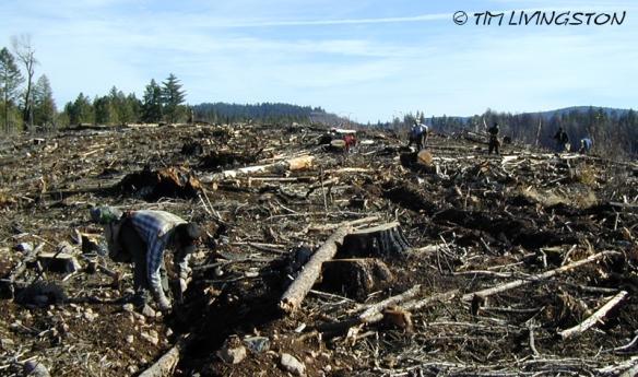 Tree planting, wildfire, fire restoration