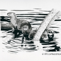 Forestry Friday ... Otter, Otter, Otter!
