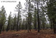 forestry, masticator, thinning, fuelbreak