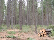 forests, forestry, forester artist, biomass, harvesting