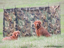 Teka and Blitz train for the hunt tests.