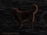 In the twilight.
