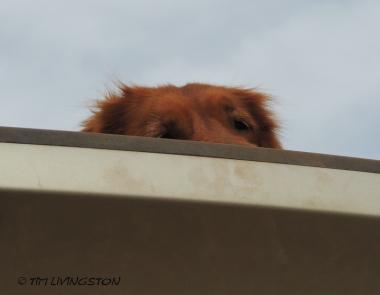 Blitz_peeking