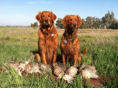 And hunting buddies