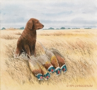 golden retriever, Blitz, pheasant, ringnecks, pheasant hunting, watercolor, watercolour, pen and ink, painting