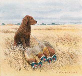 golden retriever, Blitz, pheasant, ringnecks, pheasant hunting, watercolor, watercolour, pen and ink, painting