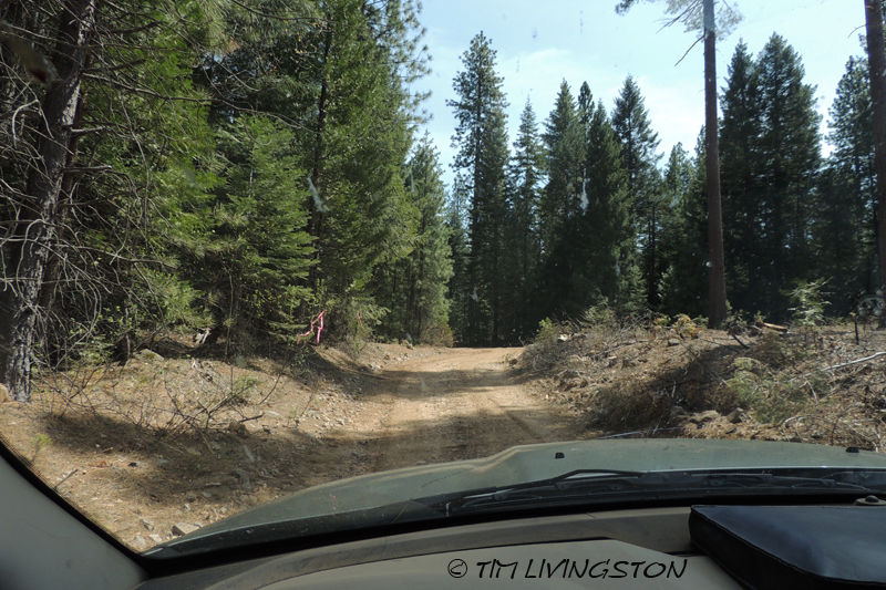 country road, logging road, woods, forest