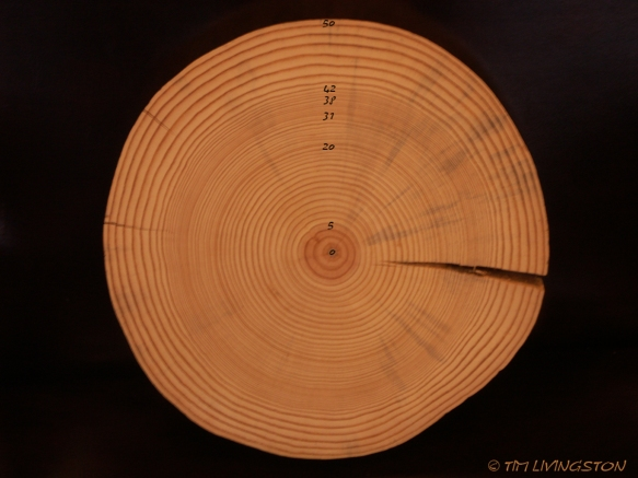 forestry, tree rings
