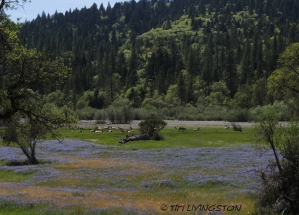 Mendocino National Forest