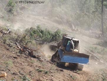 logging, skidding, skid cat