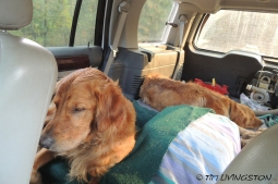 Sailor and Kinta find this whole adventure thing quite exhausting.