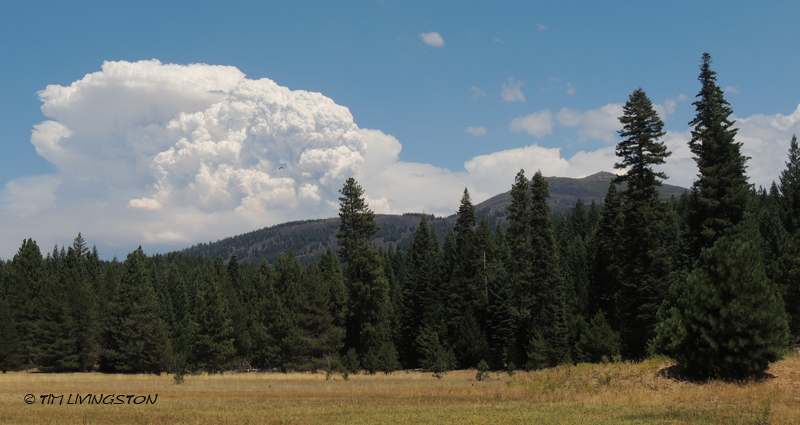 A huge thundercloud forms about The Bald Mountain Fire.