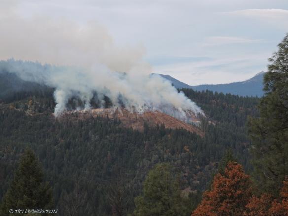 broadcast burn, forestry, burn piles