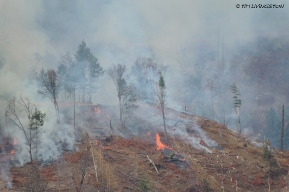 slash, logging, forestry, burning, controlled burning, prescribed burning, fuel reduction