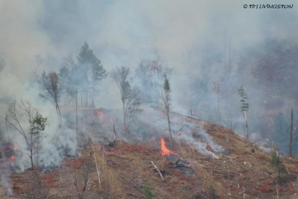 slash, logging, forestry, burning, controlled burning, prescribed burning, fuel reduction