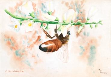 Honey bee, bee, watercolor, watercolour