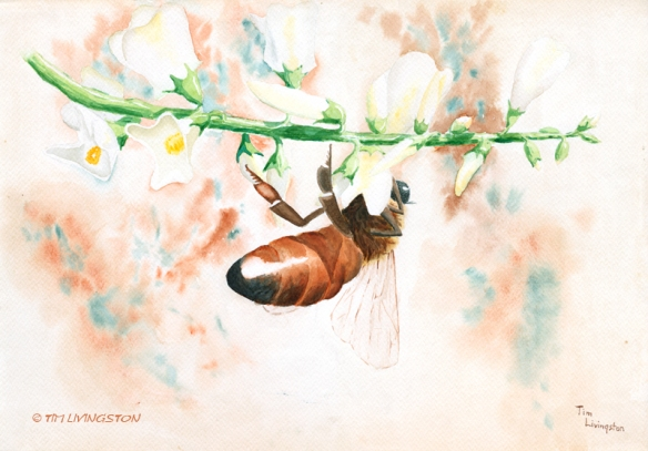 Honey bee, bee, watercolor, watercolour