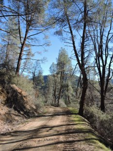 gray pine, forest road, mountains, photography