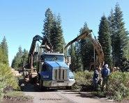 log truck, loader, logging, processor