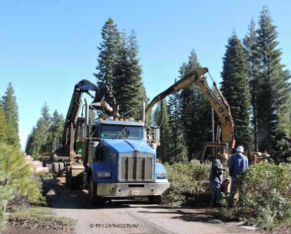 log truck, loader, logging, processor
