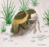 wolverine, watercolor, illustration, The Wayward Wolverine