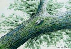 Nuthatch in a blue oak tree.