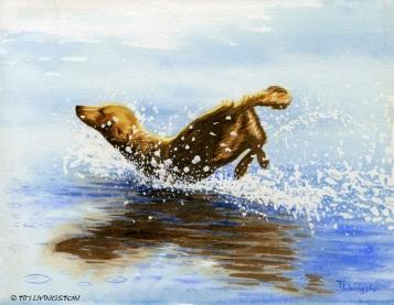Golden retriever, watercolor, watercolour, dog