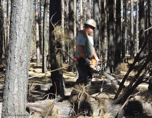 chainsaw, logger, logging, faller, falling, felling, bucking, limbing