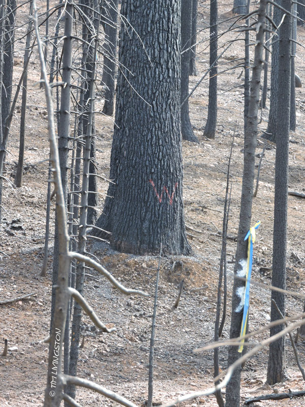 habitat retention area, wildlife, forestry