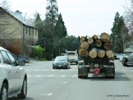 Georgetown, salvage logging, King Fire, forestry
