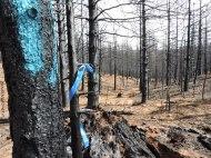 runoff, soil, stream zone, forestry