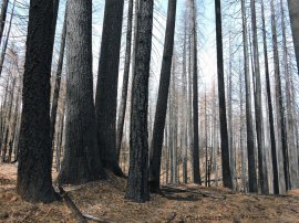 salvage logging, King Fire, forestry