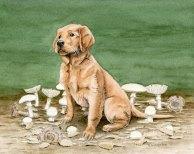 Bliss, golden retriever, dog, puppy, poison, amanita ocreata, Destroying Angel